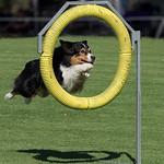 Jill Shaw - Dog agility