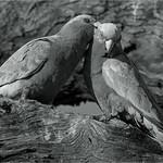 Tuck Leong - Cuddles monochrome