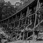 Nihal Basnayake - Historic Wooden Bridge