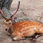 Rod Turner - deer