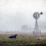 Vicki Moritz - Windmill and horse