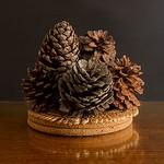 Nihal Basnayake - Pine cones