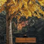 Trace O'Rourke - Bright Yellow Tree