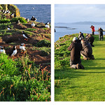 Jill Anderson - Puffin snaps