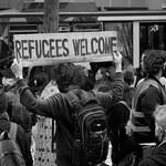 Michael Silverstein - refugees welcome