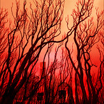 Rosie Hughes - MALLACOOTA TURNS RED
