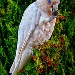 Ivan Tnay - Feeding bird in bush