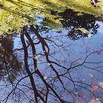 Donna Clarke - Tree reflection