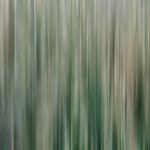 Angela McLeod - Calming Trees