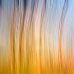 Ray Stabey - Lake Mokoan Colours
