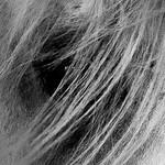 Jill Shaw - Arabian closeup
