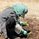 Rod Turner - planting1