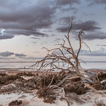 Kerry McFarlane - Salted Demise