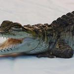 Donna Clarke - Croc patterns