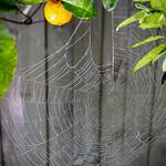 Elaine Whitton - morning web