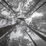 Alan Bennett - Upwardly mobile