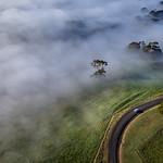 Sim Chong - Foggy morning