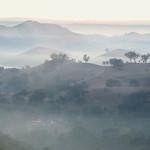 Vira Vujovich - Foggy Morning