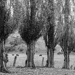 Colleen Singleton - Rural setting