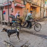 Marlene Chaitra - Back Streets of Jaipur