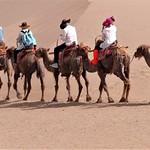Rod Turner - camel train2