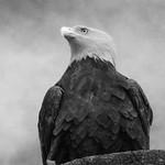 Keith Webster - Eagle eye