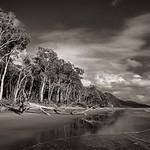 Alan Scott - Forest Beach