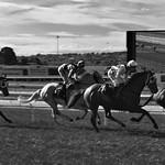 Donna Clarke - Jockeys and horses at work