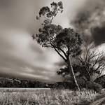 Alan Scott - Country Lane Trees