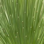 Geoff Shaw - Grasstree diamonds