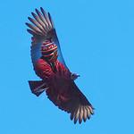 Tim Keane - Condor