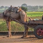 Marlene Chaitra - Resting in Rajasthan