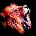 Rahul Kapur - Go Tigers!