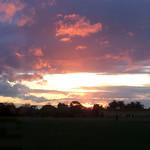 Lisa Li - Sunset at Murrumbeena Park