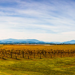 Hans Huysmans - Yarra Valley in Autumn