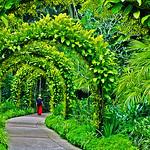 Raymond Evans - Singapore Stroll
