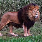 Rahul Kapur - The King
