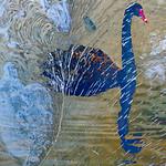 Marlene Chaitra - Blue Swan